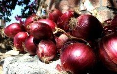 Красный лук из Тропеа