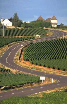 Велокухня: Тур де Франс-2010 - Бургундия - Бёф-бургиньон