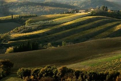 Регион Кьянти