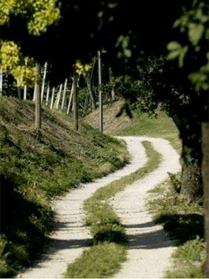 Белые дороги в окрестностях Монтальчино