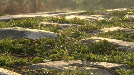 Брусчатка Аренбергского леса